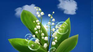 May lillies HD wallpapers 1920x1080