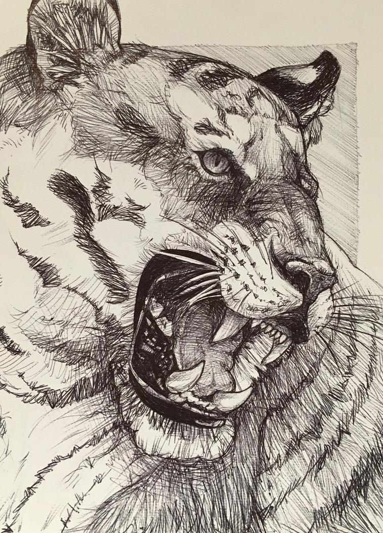 Tiger by PersoncinaSimpatica