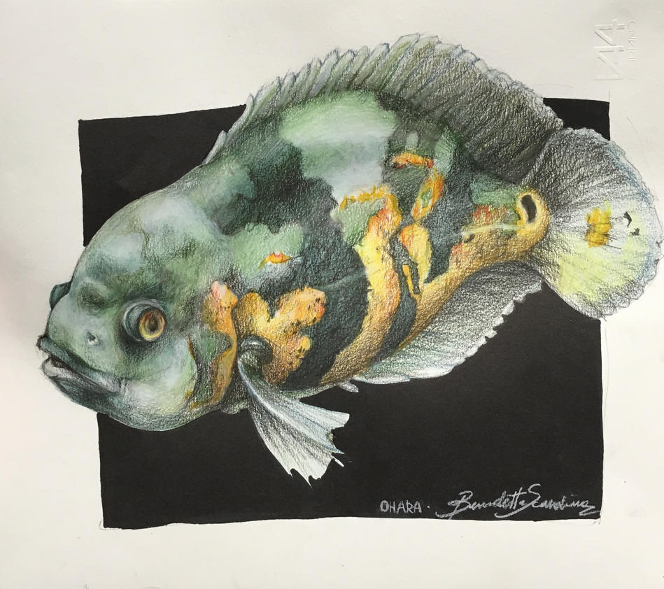 Portarti of my fish by PersoncinaSimpatica