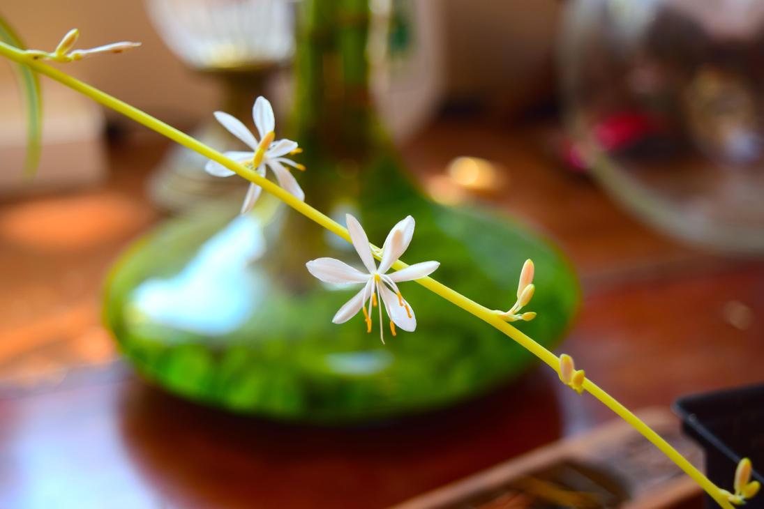 Spider Plant Bokeh! by Bushi357