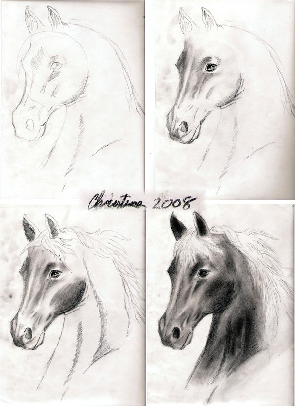 Pictures of How To Draw A Realistic Horse Head - #rock-cafe