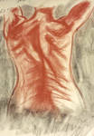 Life Drawing - Muscle Study Female Back