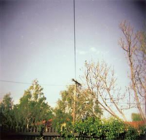 Holga Pole