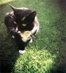 Holga Cat