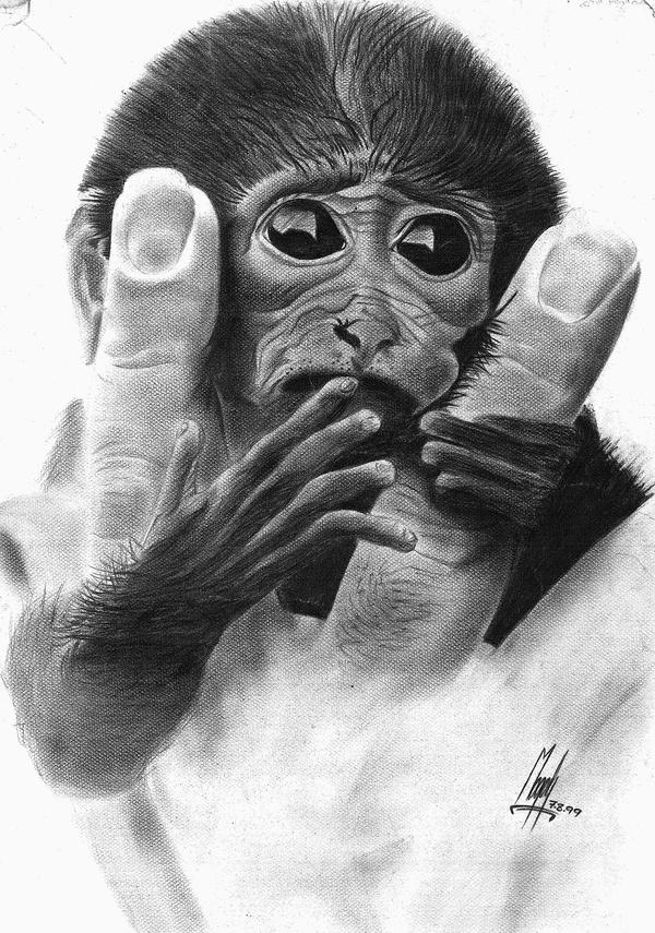 Scared Face Line Drawing : Scared little monkey by megaalexart on deviantart