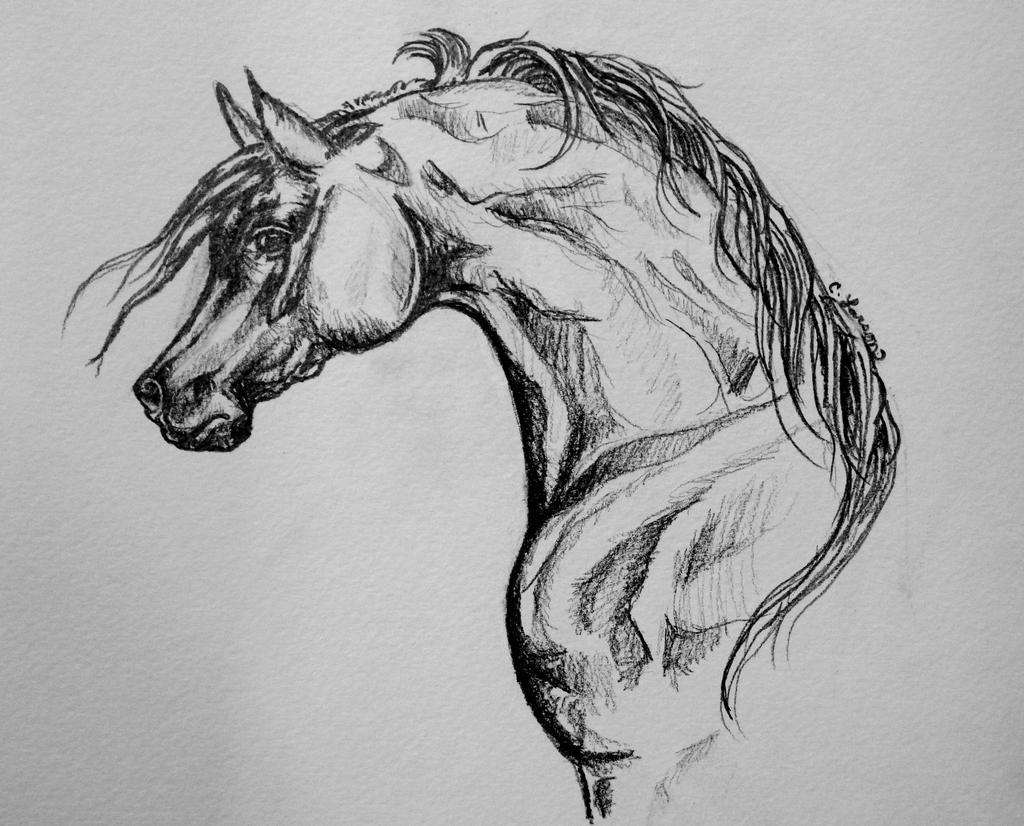 Line Drawing Of Desert Animals : Daughter of the desert arabian horse sketch by norsegirl on deviantart