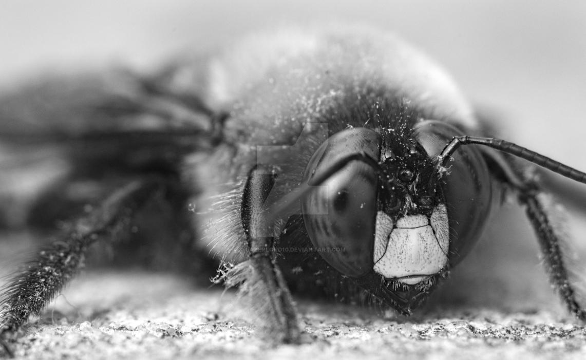 Pollinator by Lazerlord10