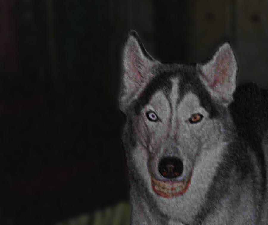 smile dog real