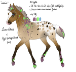 2986 Padro Foal Designed By Artoffreedom by HaloSon