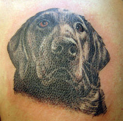 black dog portrait by arcaneserpent