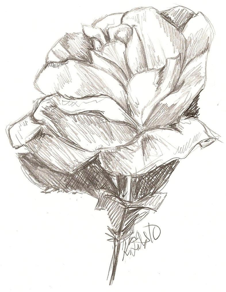 rose sketch by rai-raichanLove Rose Sketch