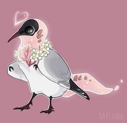 [COM] Black-headed gull
