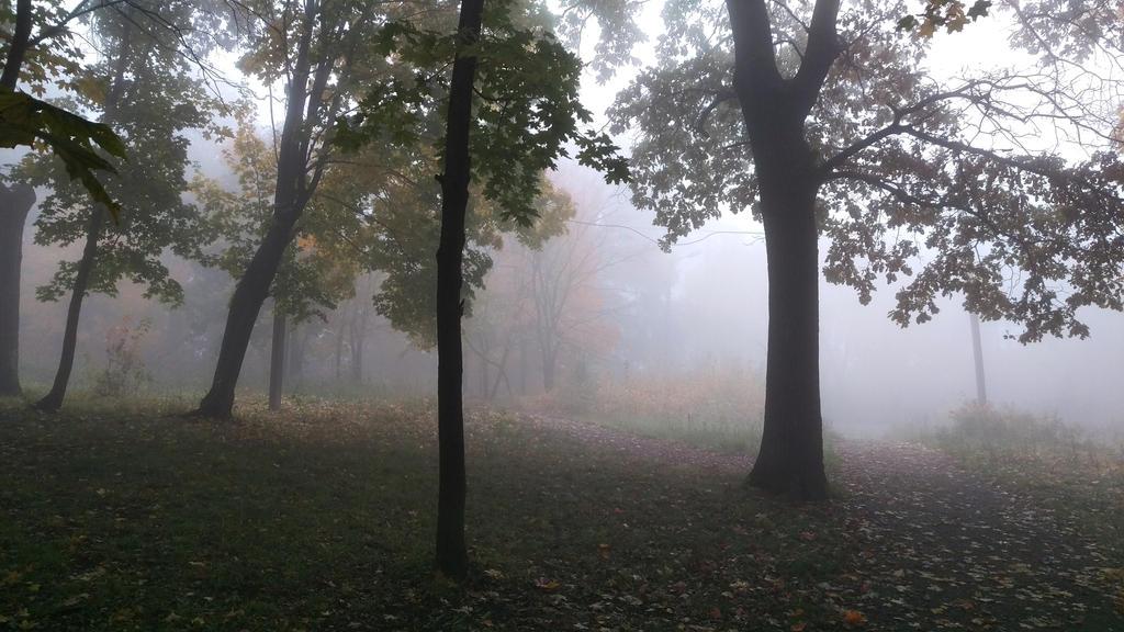 fog by MaratV