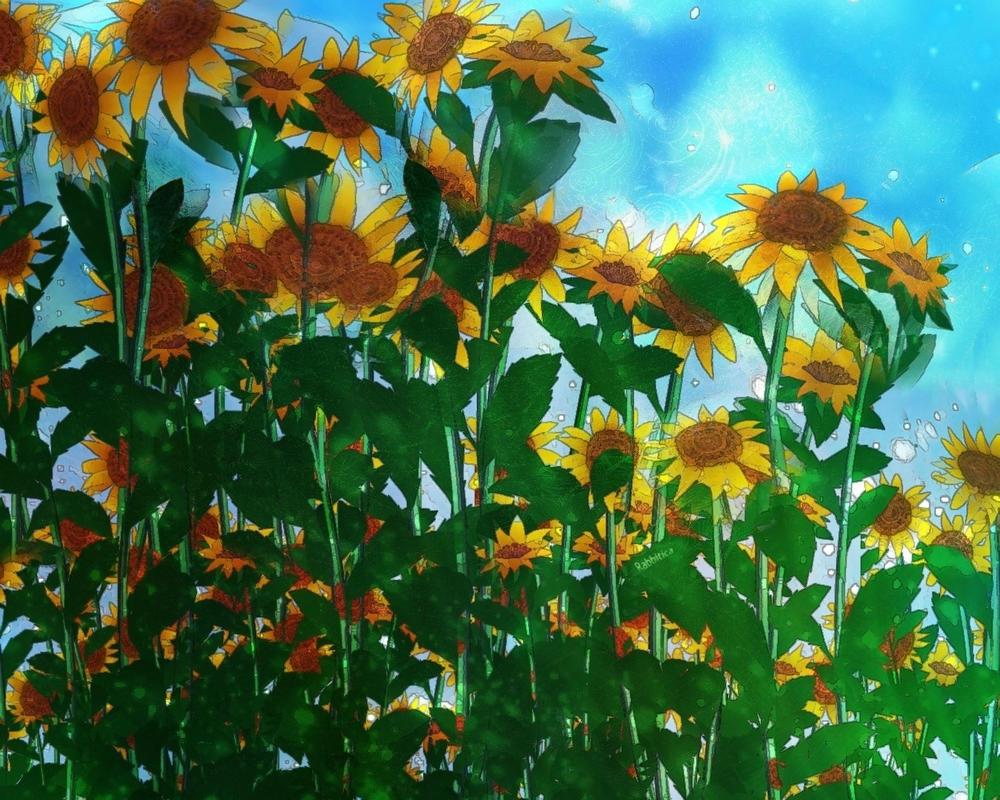 Sunflower Field by rabbitica