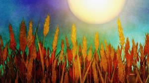 Hot August Sun