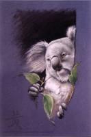Koala by Lil-el-art