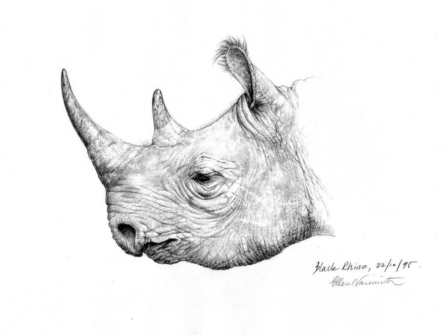 Line Drawing Rhinoceros : Black rhino by lil el art on deviantart