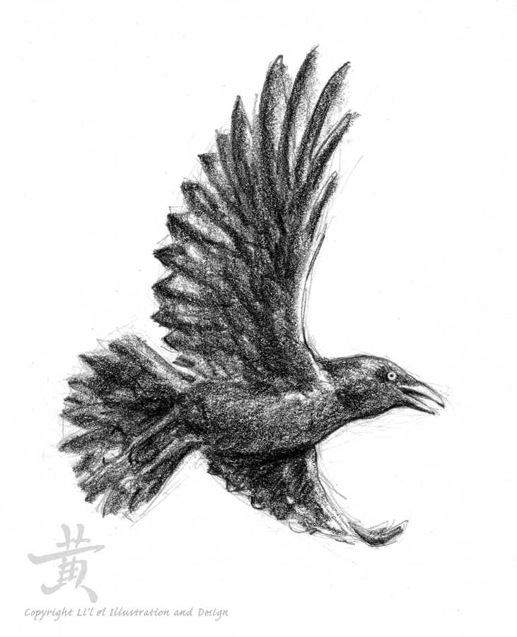 Crow Flying Away DrawingCrow Flying Away Drawing
