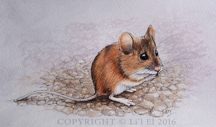 Native Field Mouse
