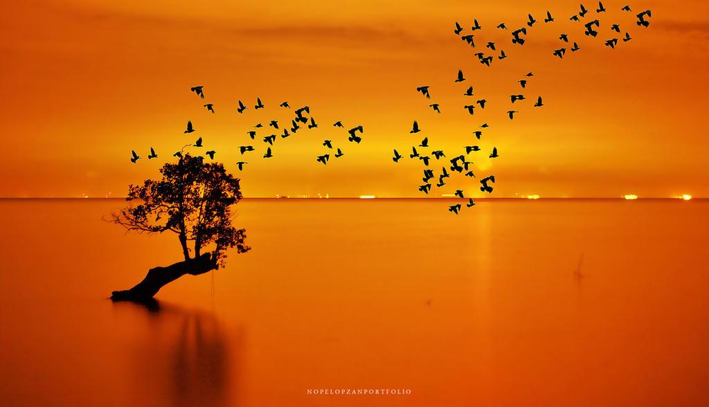 the birds by Nopel-Opzan