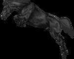 Horse Jumping Greyscale