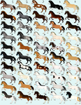 50 Horse Designs for Sale!