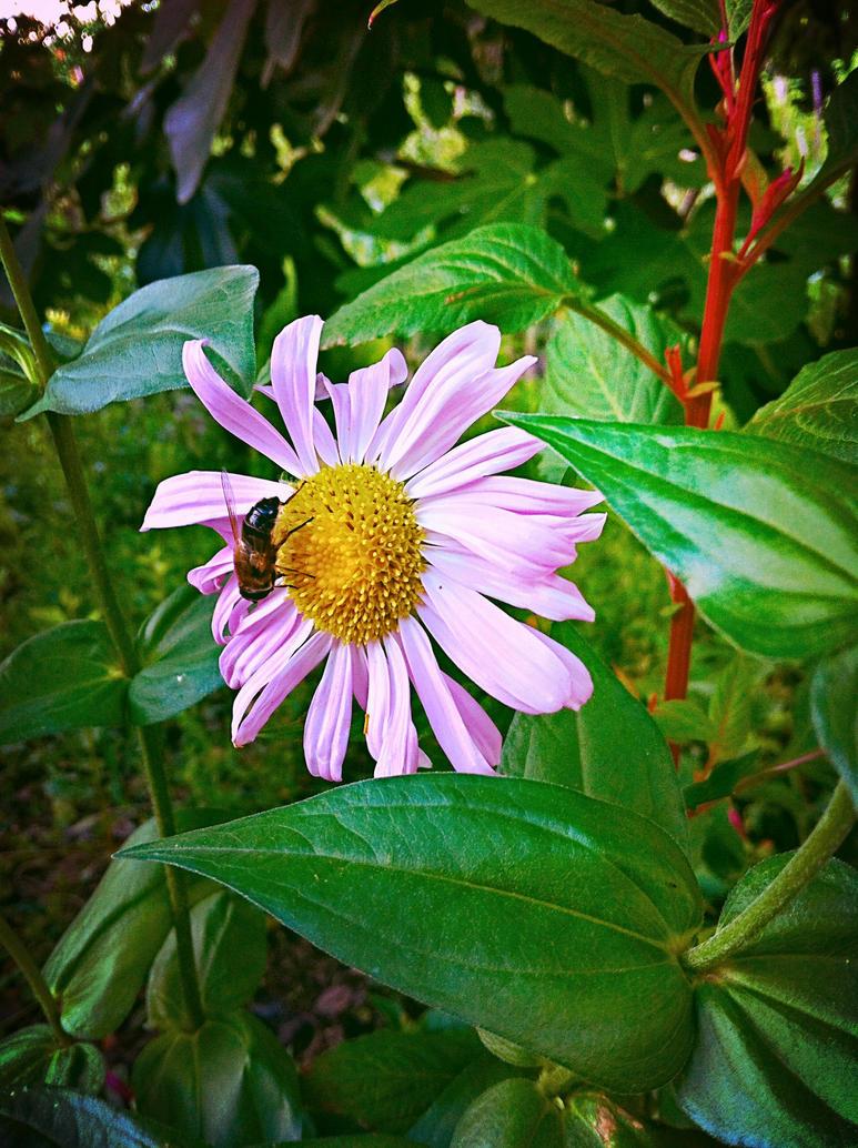 Flowers 45 by XoN1