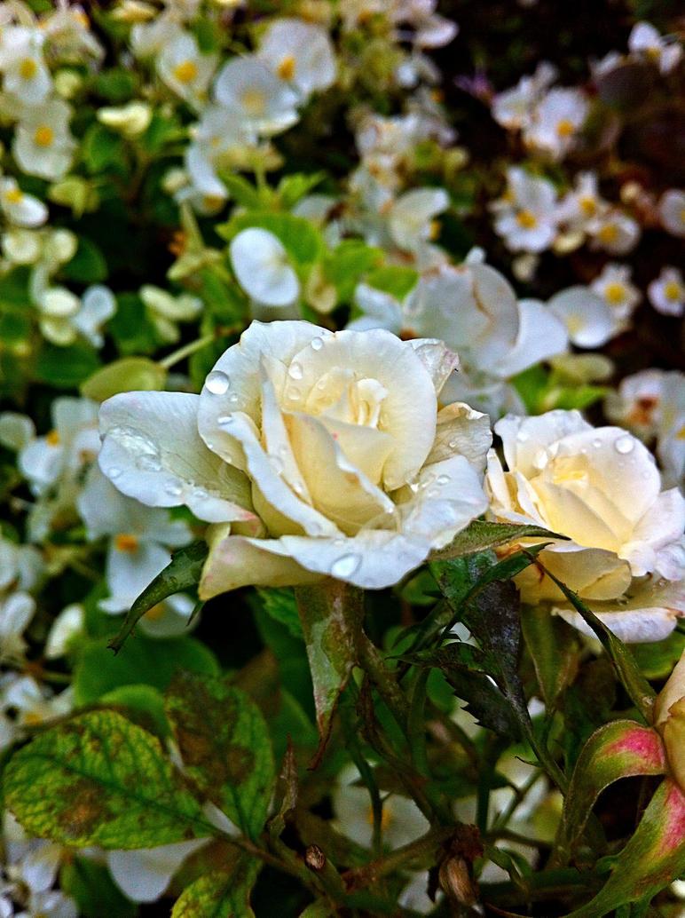 Flowers 46 by XoN1