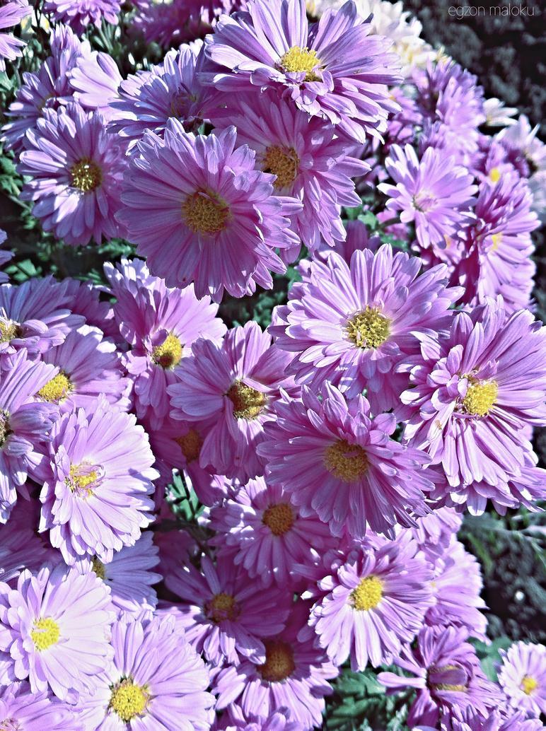 Flowers 47 by XoN1