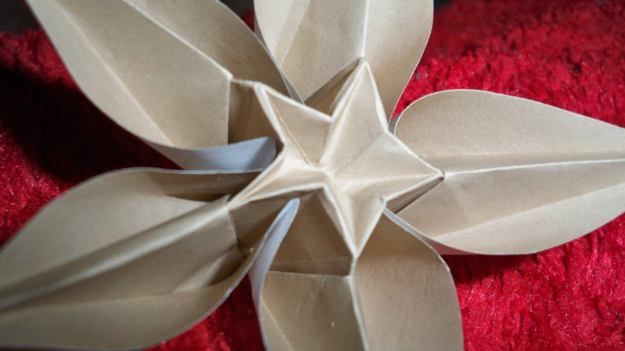 Origami Carambola Flower Close Up By Zanadov On Deviantart