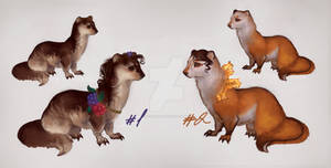 weasels adopts/ closed