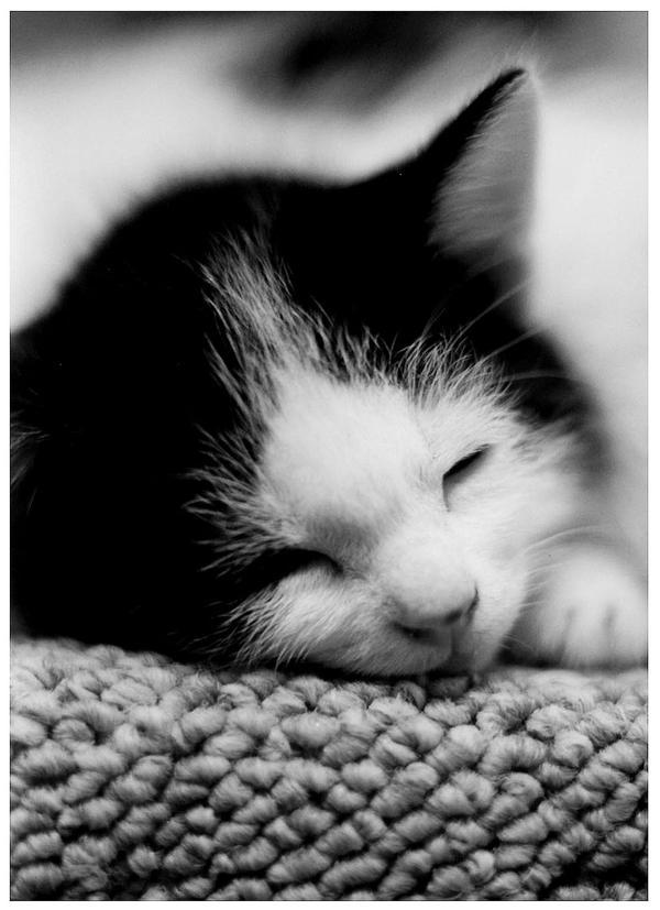 Sleeping by Akai-hana