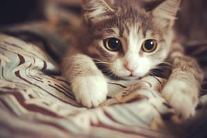 Cat by olol0