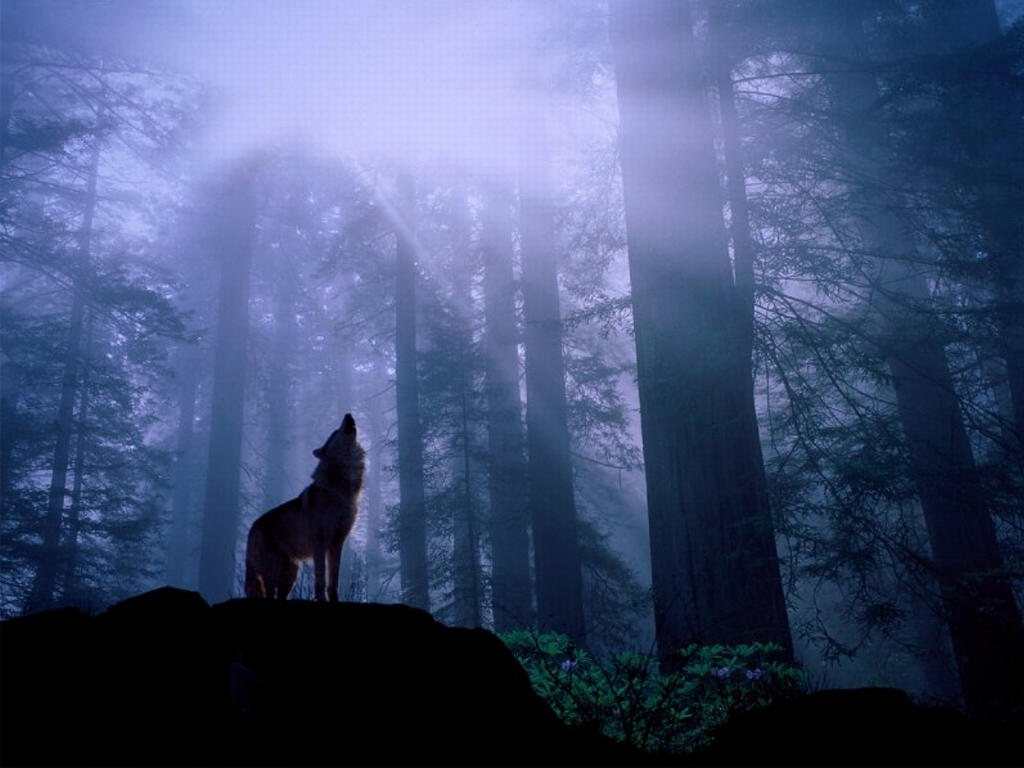 Shadow Wolf In The Mist By Drako059
