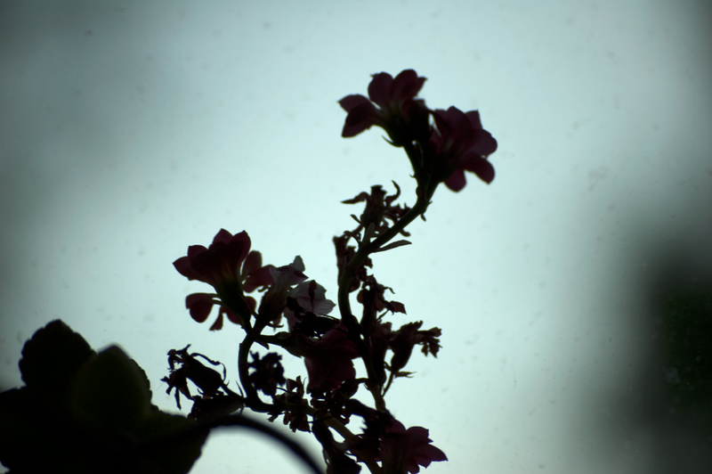 Pete Doherty – New Love Grows On Trees Lyrics - Genius
