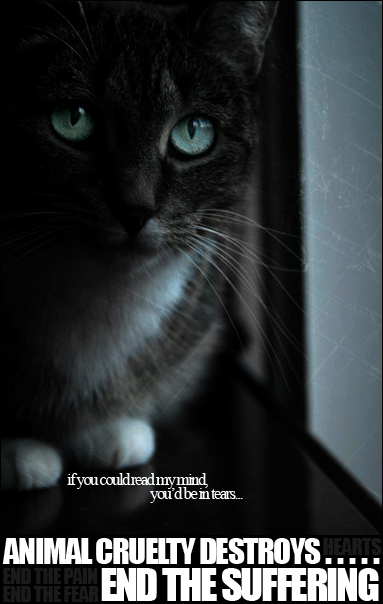 Animal abuse posters - photo#17