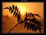 The Sunrise by catatonicheart