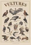 Vultures Poster by Schwartz-Design