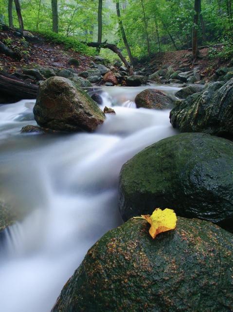 River Runs by markosb