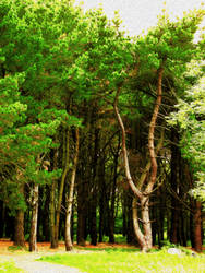 The Mystic Forest of Broceliande by crapopabo