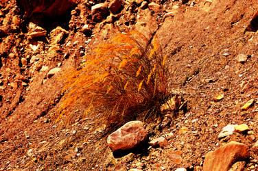 Life on Mars : the hidden report of Curiosity by crapopabo