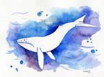 Negative whale