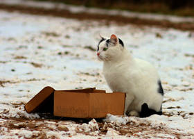 Alfi with his box by KB-Fotowelt
