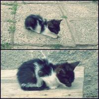 Cat Evolution by kiki-riki90