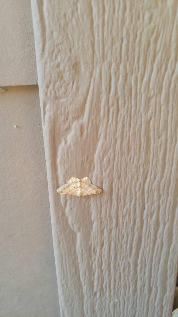 moth by JaydedPixie