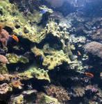 Columbus Zoo Fish Tank IMG 2398