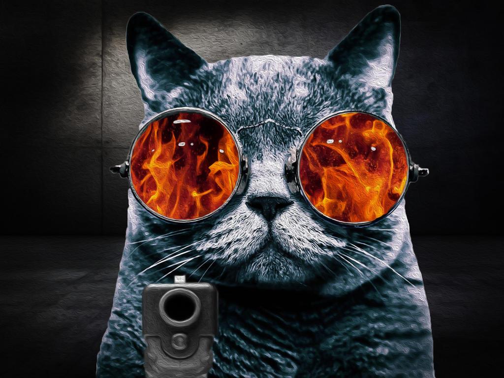 Cats On Glass Reddit