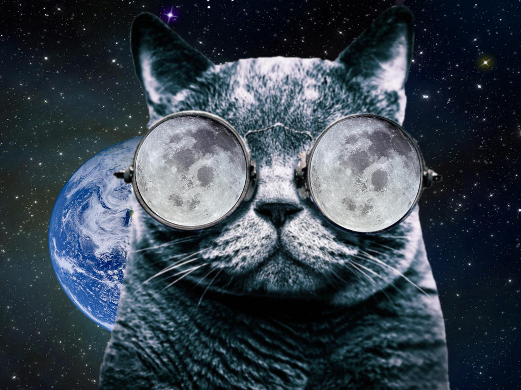 Cat Glasses Space By Stevewoods69