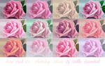 Pack n4 Roses Photoshop Actions
