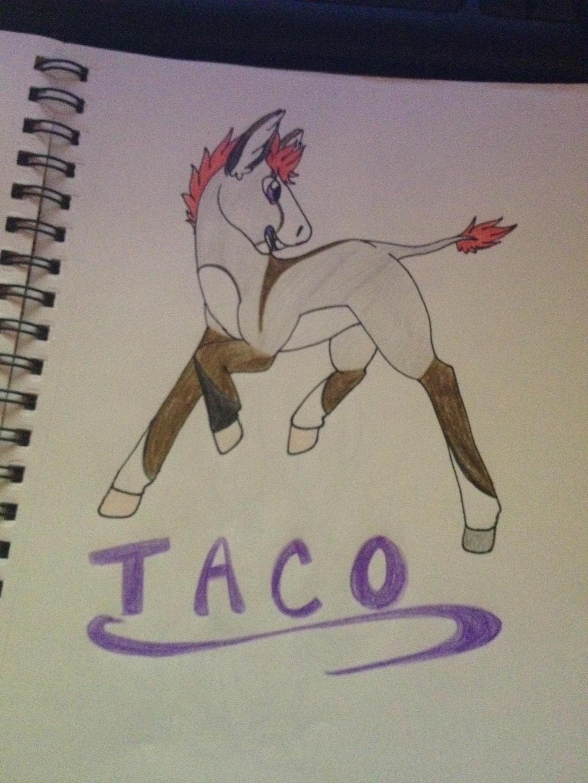 Taco by WolfytheCorsky